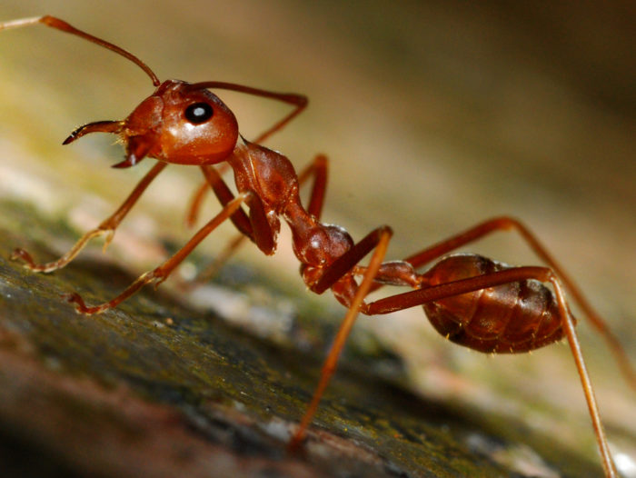 How to Be a Better Writer: Be an Ant -- Write Right